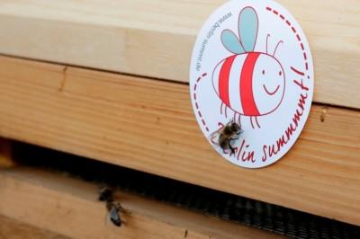 Bienen auf dem Dach der Berliner Staatsoper